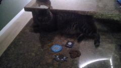 Star Citizen Patches, Cat for Scale.