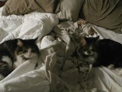 Maximus's Cats
